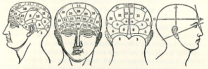 """Numbered divisions of the brain,"" originally from Fowler's Phrenological Chart"